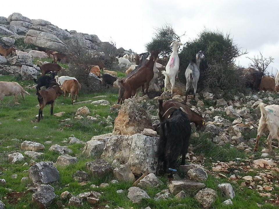 Givot Olam Farm