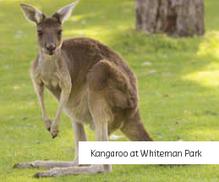 Whiteman Park.PNG