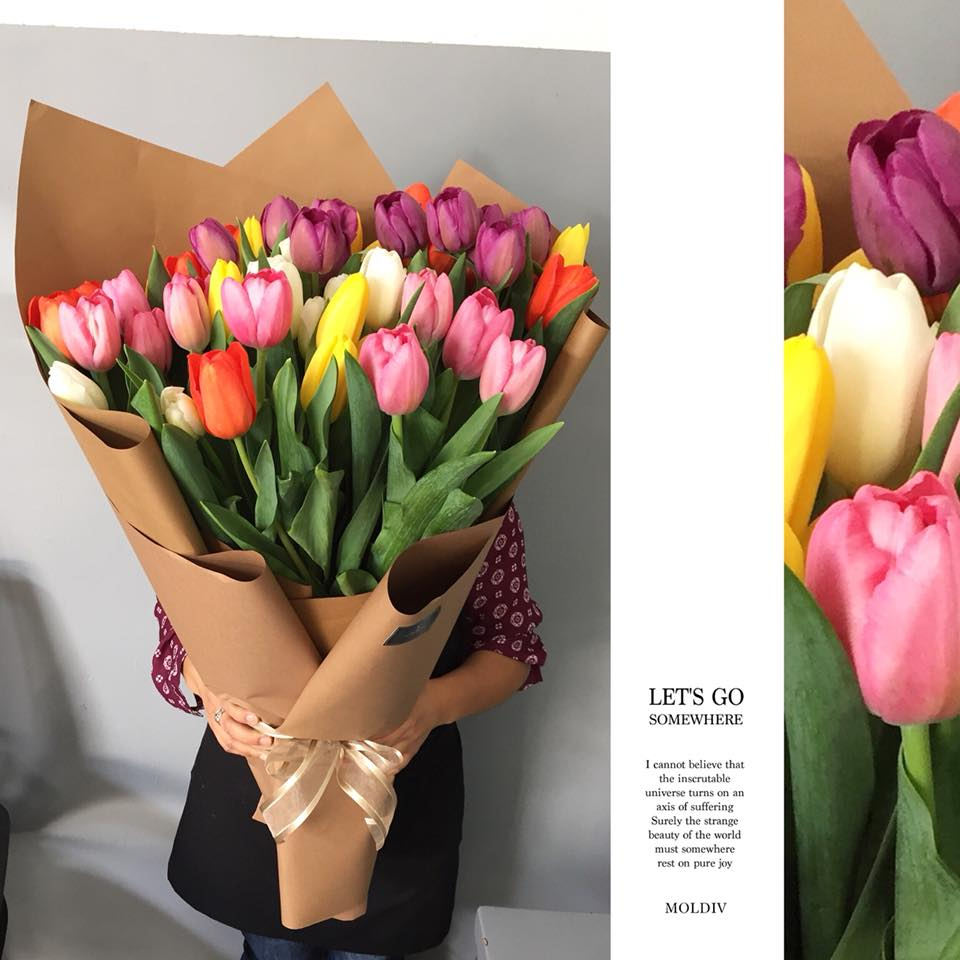 70 tulipanes