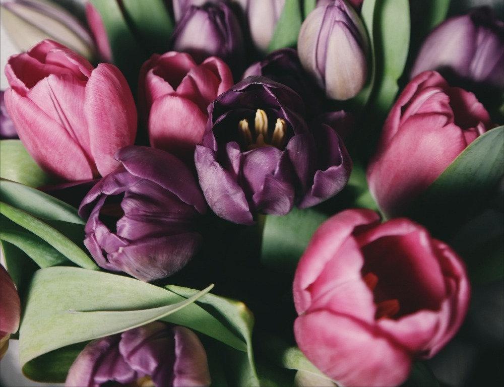 Tulipán y Gerbera