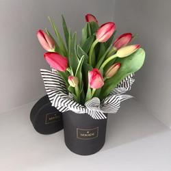 Montecarlo Tulipán