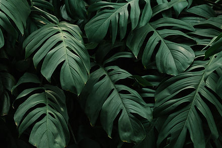 tropical-green-leaves-background (1).jpg