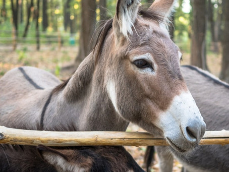 We Need More Donkeys!