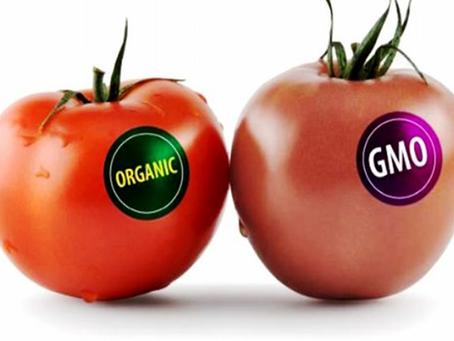 Äärmuslikud GM-toitude vastased