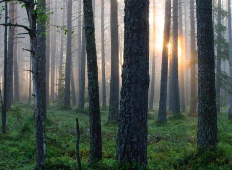 Kuidas mets stressitaset maandab?