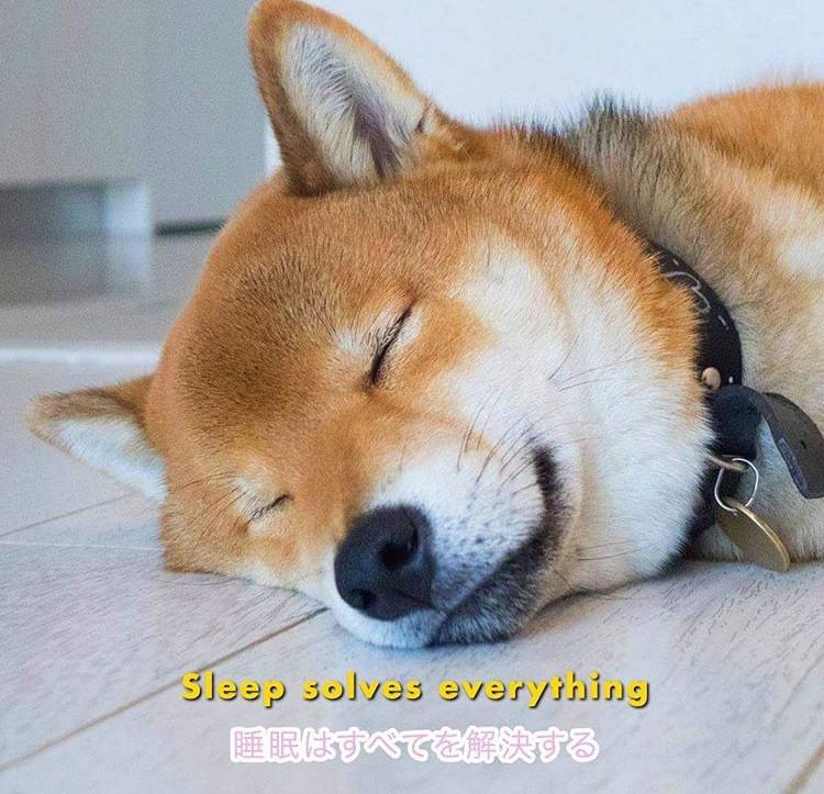 Tofu Chan Pupper