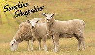 Logo with real sheep.jpg