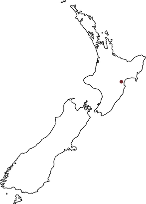 NZ map outline with Dot.png