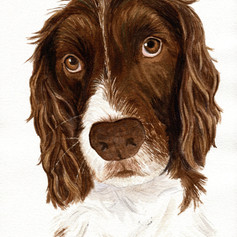 Jet's portrait