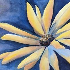 daisy (2).jpg