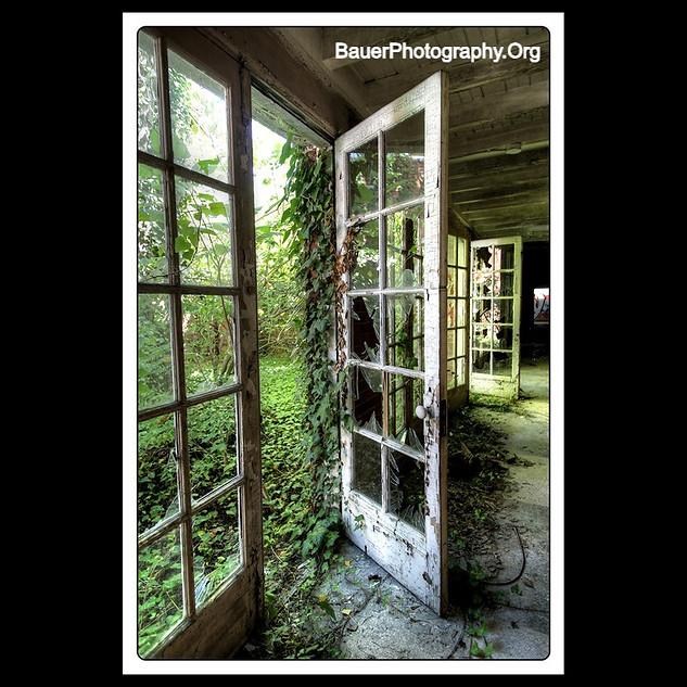 White Door,Green Vine, Broken Glass