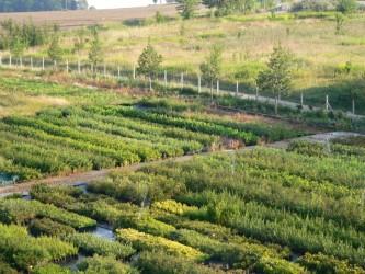 Jinošov - okrasná zahrada