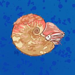 Fuzzy Nautilus