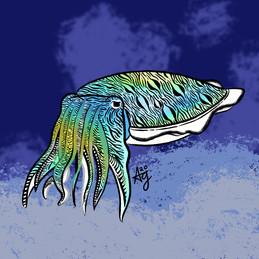 Kisslip Cuttlefish