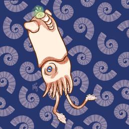 Ram's Horn Squid