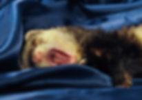 岐阜でエキゾチック診療が得意な動物病院