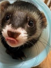 エキゾチック動物の診察について