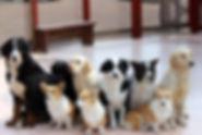 岐阜北どうぶつ病院の犬