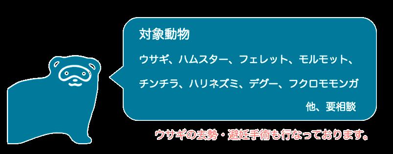 岐阜 北 動物病院 エキゾチック ウサギ ハムスター フェレット モルモット チンチラ ハリネズミ デグー フクロモモンガ
