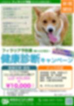 岐阜北どうぶつ病院のドック検査キャンペーン