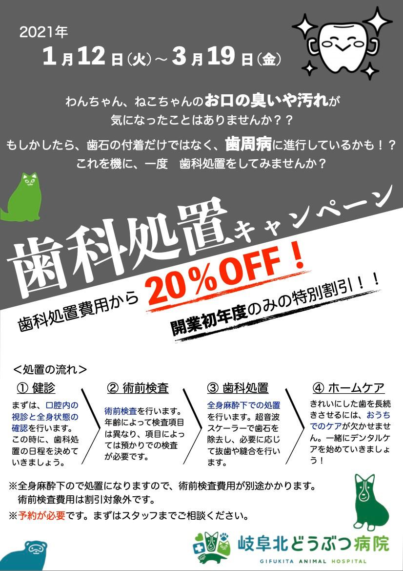 岐阜 北 動物病院 歯石除去 キャンペーン