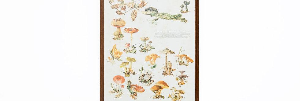 Vintage school poster Instituut voor Natuurbeschermingseducatie paddestoelen paddestoel