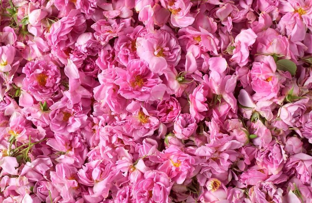 Duizenden rozenblaadjes uit geurcompositie 2