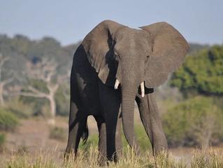 Het geurgeheugen met een ode aan de olifant.