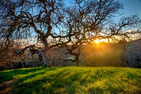 Campsite Oak Sunset v_2.jpg
