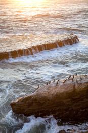 Bird Flow Tide Set-0001.jpg
