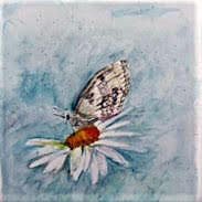 Marbled White Butterfly by Linda Gray,