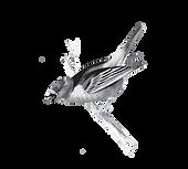 ציפור מובייל 2.png