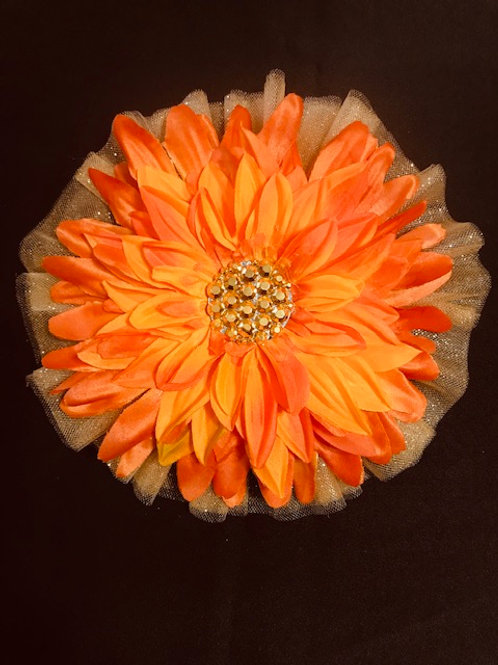 Large spring Orange flower
