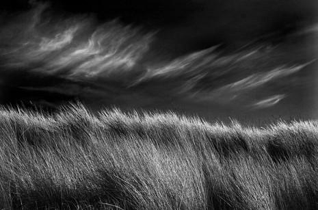 MONO: 'Brush Strokes' by Leonard Ferguson - Ballymoney Amateur Photographic Club