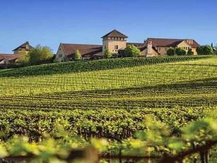 Paella in the Vineyard 2017 — September 24th