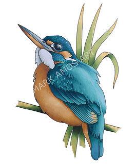 Kingfisher watermark.jpg