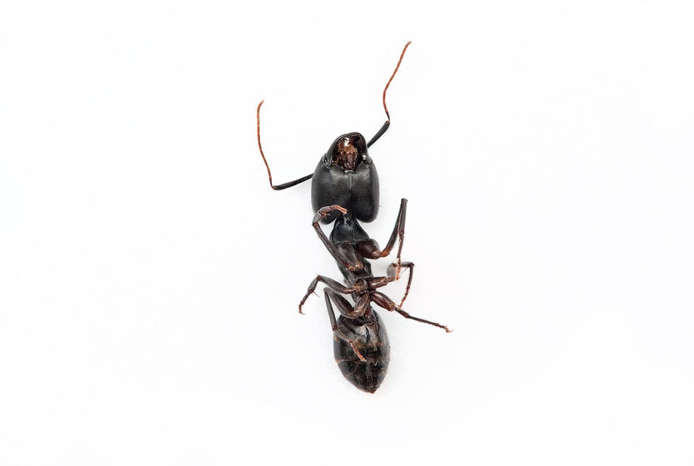 Dead Bug on a white backdrop