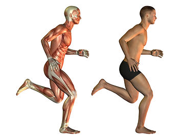 regenerate and strengthen your body