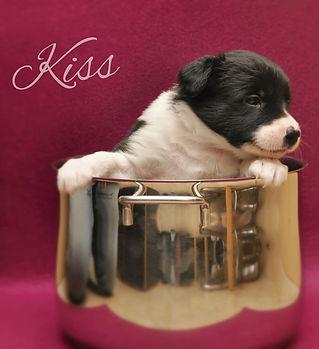 Kiss 4 Wochen 2.jpeg