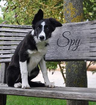 spy.jpeg