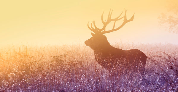 deer rainbow NEW.jpg