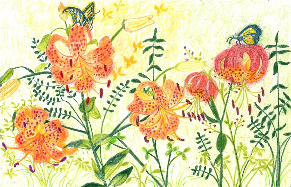 Turk-cap-lilies-my-favorite-cc.jpg