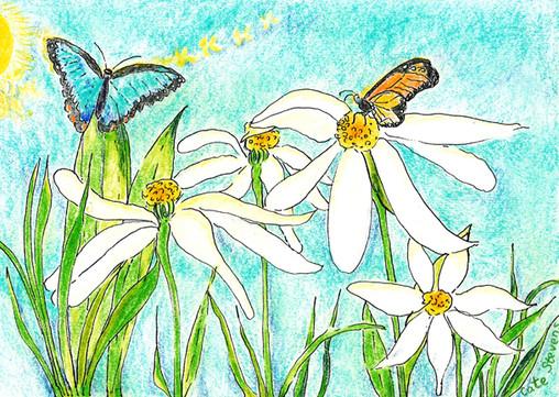 Shannon-loves-butterflies-cc.jpg