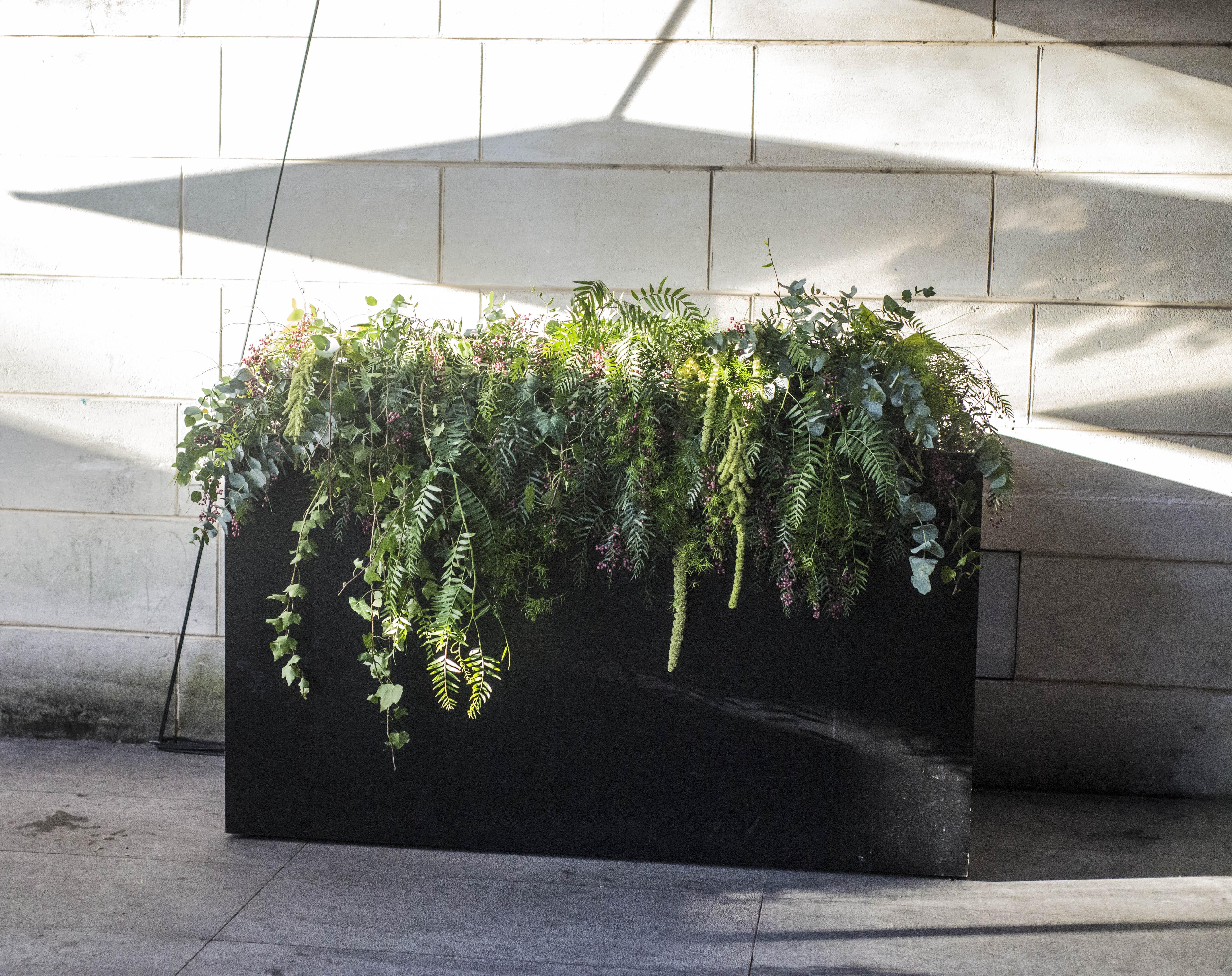 Abundant green feature flowers
