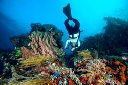 Scuba diver exploring the Reef