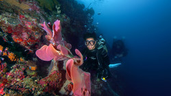 Scuba diver with pink coral