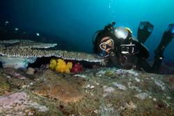 Diver with Wobbegong Shark