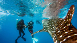 Close encounter with a whale shark