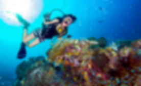 PSAI Sport Diver Programs