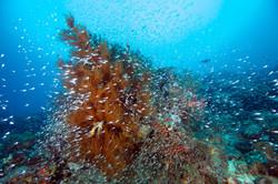 Fish at Reef